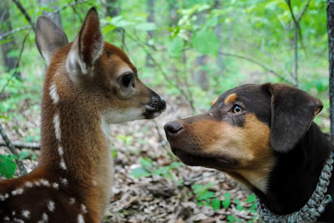 EW Dog and Deer