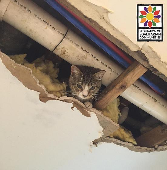 FEC Cat