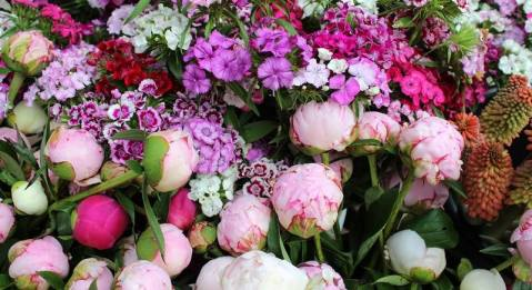 Toms flowers