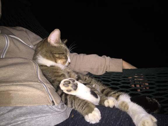 PAC cat
