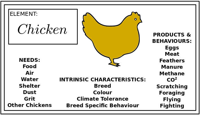 permaculture_chickenby-dt
